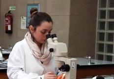 Instituto de Higiene e Medicina Tropical abre candidaturas a programas de Doutoramento